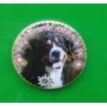 Placka se špendlíkem a velkým švýcarským salašniským psem